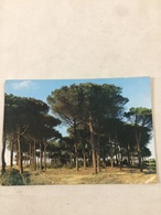 Cartolina-Ravenna-Cervia-Milano Marittima-la Pineta - Ravenna