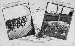 Eine Strecke Eidergänse - A Bag Of Eiderducks  -  Abspeckung Eines Wales - Flensing A Whale  (pingouins, Phoque, Baleine - Fischerei