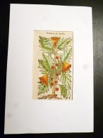 BELLE GRAVURE SUR BOIS TIREE DU LIVRE HISTOIRE DES PLANTES DATURA DE ACOSTA BOTANIQUE FLEURS - Jusque 1700