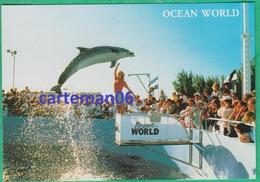 Etats-Unis - Ft. Lauderdale - Ocean World - Dolphins, Dauphin - Fort Lauderdale