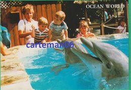 Etats-Unis - Ft. Lauderdale - Ocean World - Dolphins, Dauphins - Fort Lauderdale