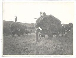 AGRICULTURE - Scène De Moisson - Cultures
