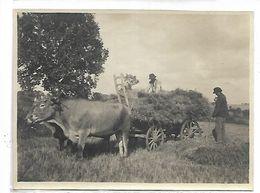 AGRICULTURE - Scène De Moisson - Landbouw