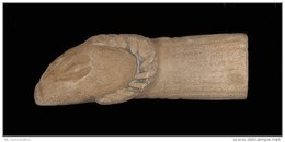 A Roman Black Stone Animal Head - Aquariophilie