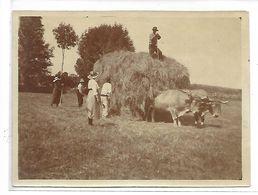 AGRICULTURE - Scène De Moisson Juillet 1920 - Cultures