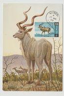 Carte Maximum Antilope - Kenya (1963-...)