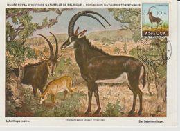 Carte Maximum Antilope - Angola