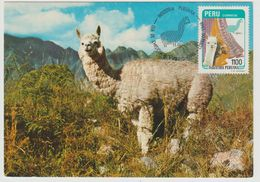 Carte Maximum Alpaga - Peru