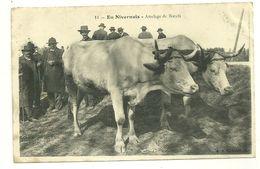 EN NIVERNAIS ATTELAGE DE BOEUFS METIER AGRICULTURE - Wagengespanne