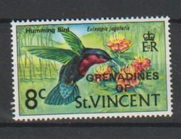 Grenadines Of St Vincent.   Purple-throated Carib    Eulampis Jugularis - Hummingbirds