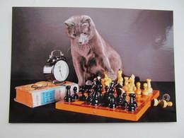 Cat Playing Chess   - Schach  - Ajedrez - Echecs - Echecs
