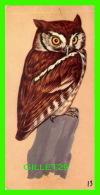 FICHES ILLUSTRÉES OISEAUX - BIRDS,  SCREECH OWL - No 13 - - Animaux
