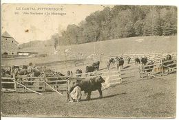LE CANTAL - Pittoresque - Une Vacherie à La Montagne - Non Classés