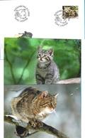 """Suisse-Schweiz 2009: Zu 1313 Mi 2102 Yv 2037 """"Wildkatze-Chat Sauvage-Wildcat"""" Auf FDC + 2 Postkarten - Chats Domestiques"""