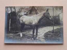 PAARD / HORSE / CHEVAL ( Géén ID ) Waar ?? ( Zie Foto ) Anno 19?? ! - Altri