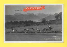 CPA 74  AU SOMMET DU SALEVE - LES PATURAGES Vaches CARTE PHOTO SARTORI - France