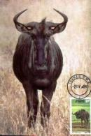 SWA, 1984, Mint Maxi Cards, MI Nr. 9, Wildebeest - South West Africa (1923-1990)