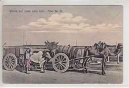 ADEN - BULLOCK AND CAMEL WATER CARTS - ILLUSTRATION - 28.07.11 - Yémen