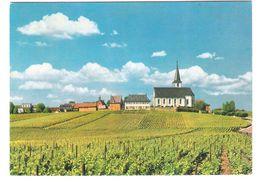 Deutschland - Hochheim Am Main - Südansicht Mit Kirche - Hochheim A. Main