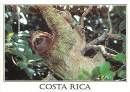 COSTA RICA  PARESSEUX PEREZOSO - Costa Rica
