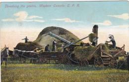 Western Canada Threshing The Grains 1910 - Cultivation