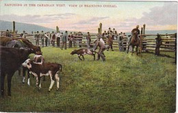 Ranching In The Canadian West View In Branding Corral - Farms