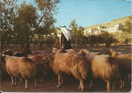 CPM - Berger En Jordanie Pastore In Giordania Shepherd In Jurdan - Jordan