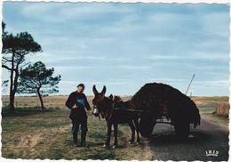 17 - ILE DE RE - Transport De Varech Qu'on Recueille Pour Amander Les Terres Sablonneuses De L'île... / Ane / 1971 - Ile De Ré
