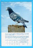 Cp Carte Postale   -   Pigeon - Vögel
