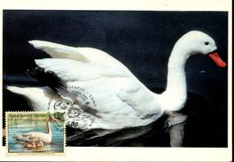 30660 Uno Issue Austria. ., Maximum, Cygne, Swan  Schwan - Swans