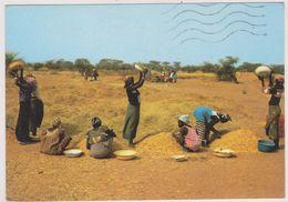 AFRIQUE,SENEGAL,METIER,FEMME AU TRAVAIL - Sénégal