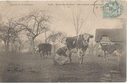 Lot N°40601 Ces Bonnes Vaches Laitiéres, Environs De VIRE - Vire