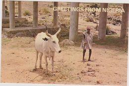 AFRIQUE ,AFRIKA,GREETINGS FROM NIGERIA - Nigeria