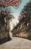 Bermuda Hamilton Mount Langton Road 1926 - Bermuda