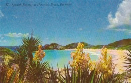 Bermuda Spanish Bayonet St Horseshoe Beach - Bermuda