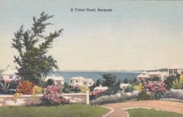 Bermuda A Tribal Road - Bermuda
