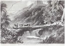 Gravure De  1867 Interieur D Une Foret  De MADAGASCAR  CAP SAINT VINCENT - Vieux Papiers