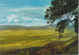 Ngorongoro - Veduta Panoramica Del Cratere Di Ngorongoro - Tanzania
