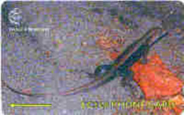 DOMINICA : 244B EC$20 Ground Lizard USED - Dominica