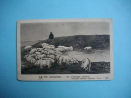 HISTOIRE  -  LA VIE GAULOISE  -  L'élevage Gaulois    -  Fernand Nathan éditeur - Histoire