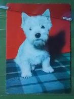 KOV 1062 - DOG, HUND - Chiens