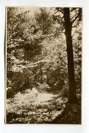 Spring Woods West Wickham - London