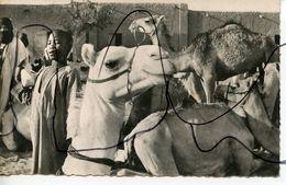 CPSM. PF. SOUDAN.  GAO.  Le Marché Aux Animaux.  P. CHANGEUX - Sudan