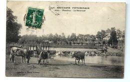 PONTIVY - Vaches Au Déversoir - Pontivy