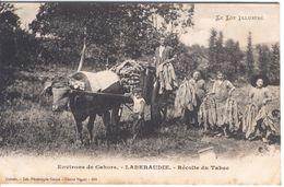 CAHORS - Laberaudie  - Recolte Du Tabac - Cahors