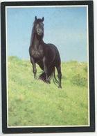 La Passion Du Cheval : Etalon Merens (photo Serge Farisssier) Cp Vierge - Horses