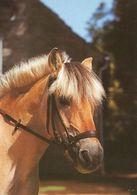 HORSES / PFERDE / CHEVAUX /    POSTCARD  UNUSED     ( H  4816 ) - Pferde