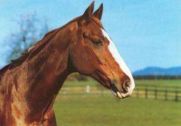 HORSES / PFERDE / CHEVAUX /    POSTCARD  UNUSED     ( H  4822 ) - Pferde