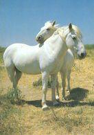 HORSES / PFERDE / CHEVAUX /    POSTCARD  UNUSED     ( H  4825 ) - Pferde