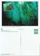 CPM TAAF Kerguelen Les Algues Macrocystis Neuf ** - TAAF : Terres Australes Antarctiques Françaises